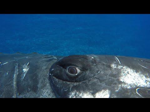 Blízká setkání: Zachráněna velrybou