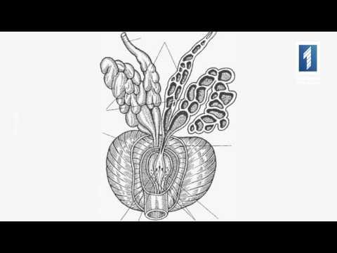 Биопсия предстательной железы кутузовский