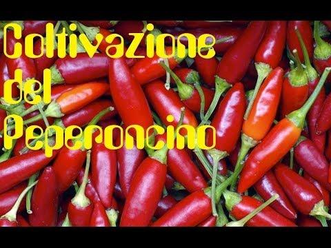 Coltivazione del Peperoncino Bio (In vaso o in terra)