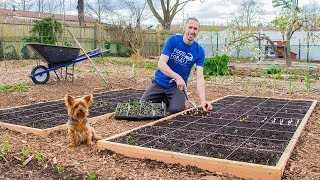 SQUARE FOOT Gardening, How To Grow MORE FOOD In LESS SPACE!