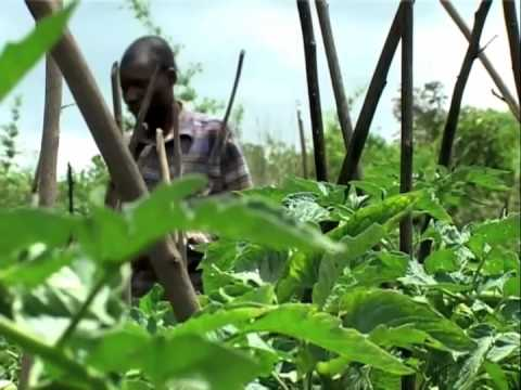 Millennium Promise presents » Three Seasons: Malawi (2 of 3)