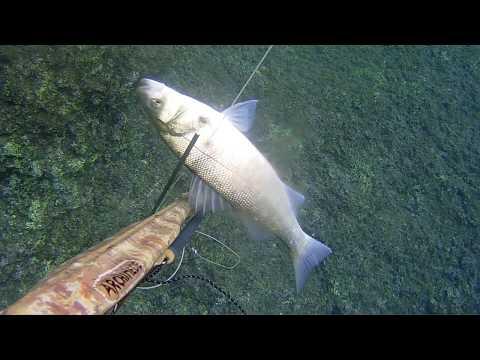 La pesca nella regione di Saratov in contatto