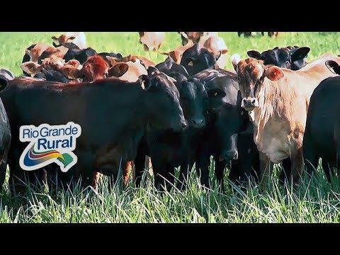 Sistema ILPF aumenta matéria orgânica no solo