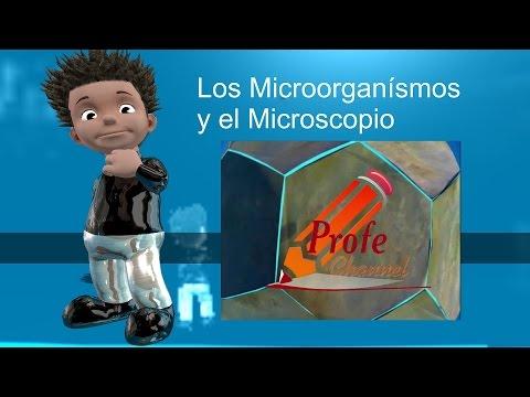 Los microorganismos y el microscopio