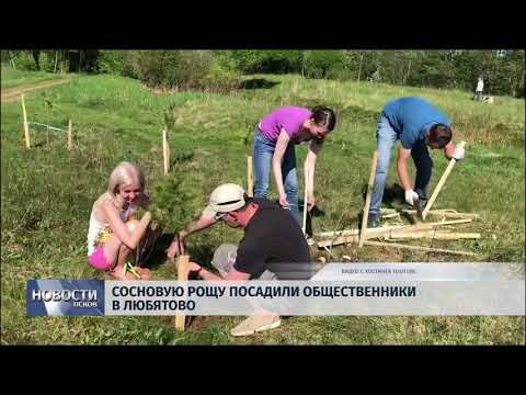 Новости Псков 14.05.2018 # Сосновую рощу посадили общественники в Любятово