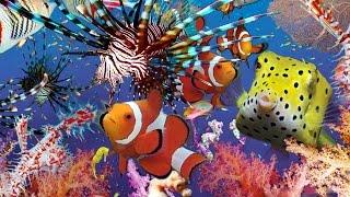 preview picture of video 'DIVING- Prince John Dive Resort- full HD- Indonesien  Sulawesi Jangkar Blue Tauchfilme'