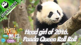 【Panda Scanning】Ep3 Head girl of 2016, Queen Roll Roll 20170619 | iPanda