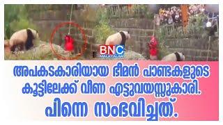 BNC MALAYALAM |അപകടകാരിയായ ഭീമന് പാണ്ടകളുടെ കൂട്ടിലേക്ക് വീണ എട്ടുവയസ്സുകാരി.പിന്നെ സംഭവിച്ചത്.