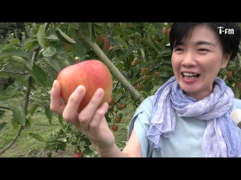 いばたべGO!「りんご」#31