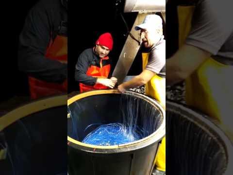 Tasto attivo di pesca di facilità di ricreazione