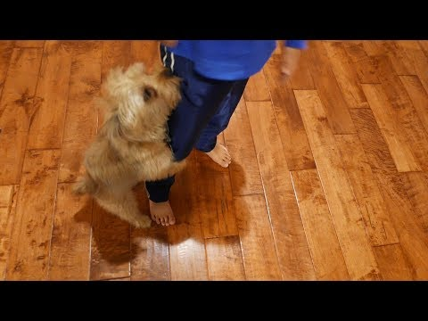 Puppy Humping Leg Of Kid (HD)