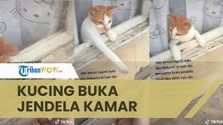 Viral Video Aksi Kucing Bernama Kenzo Bantu Buka Jendela Kamar Pemiliknya yang Terkunci dari Luar