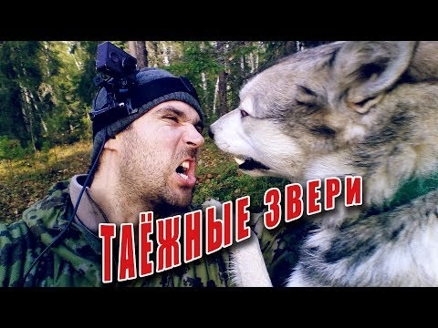 Solo Camping in the woods. Hunting and fishing in the taiga | Одиночный поход с лайкой. Поход в лес.