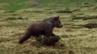 Medveď