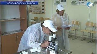 Шесть зоотехников области сразились за шанс стать лучшим осеменителем коров России