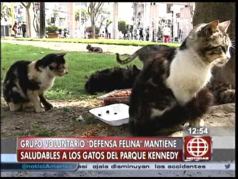 Defensa Felina en de los gatos del Parque Kennedy - América Noticias