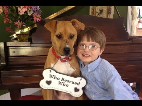 An abused dog and a young boy with autism: a story of love and hope