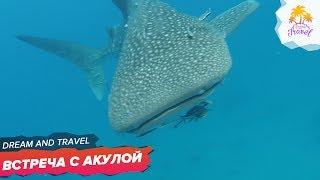 Остров Тао. Втреча с акулой. Самый красивый остров в Таиланде.