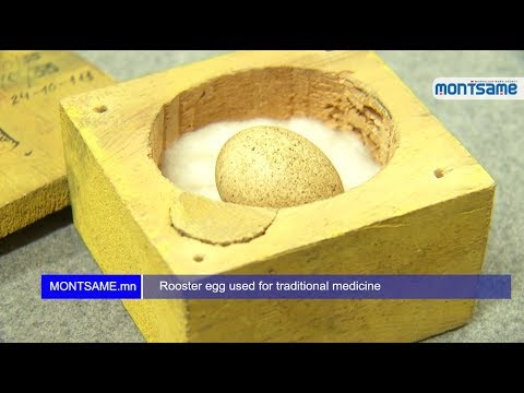 Rooster egg used for traditional medicine