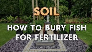 How to Bury Fish for Fertilizer