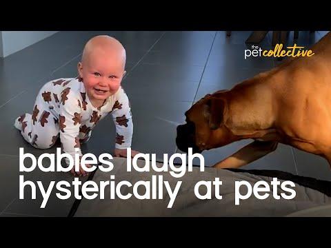 הכלבים החמודים האלה יכולים להצחיק תינוקות ברגע!