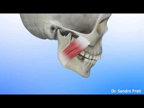 Muscoli della colonna vertebrale cervicale