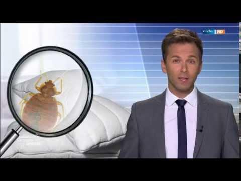 Das Merkblatt über die Würmer