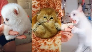 Котики и Собачки Котята и Щенки.Смешные и милые видео 2019.# 2  Cats and Dogs Funny and cute.