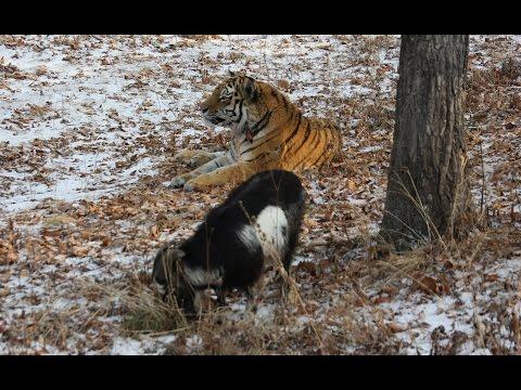 "Телекомпания ""Живая планета"" снимает фильм о Приморском Сафари-парке - Приморский Сафари Парк"