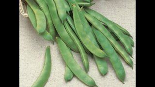 Growing Pole and Bush Beans
