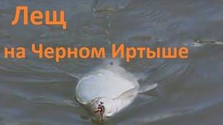 Диалоги о рыбалке ловля леща на кольцо