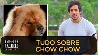 TUDO SOBRE A RAÇA CHOW CHOW | BOM PRA CACHORRO