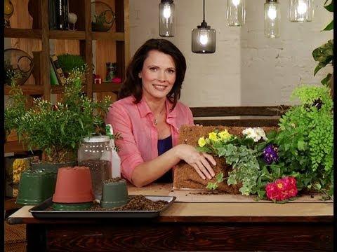 Make a Living Plant Wall – Mom-Ed: Green Living – Episode 3