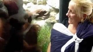 Орангутан хочет увидеть малыша 🤗