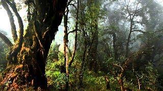 The Deep Dark And Dense Forest Of India    Arunachal Pradesh    Bompu Camp