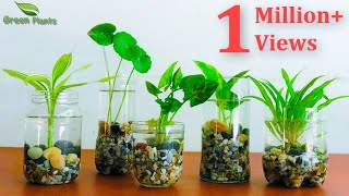 How To Make Indoor Water Garden From Recycled Materials   Indoor Hydroponic Gardening//GREEN PLANTS
