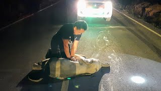 video: Baby elephant in Thailand hit by motorcycle saved after receiving CPR
