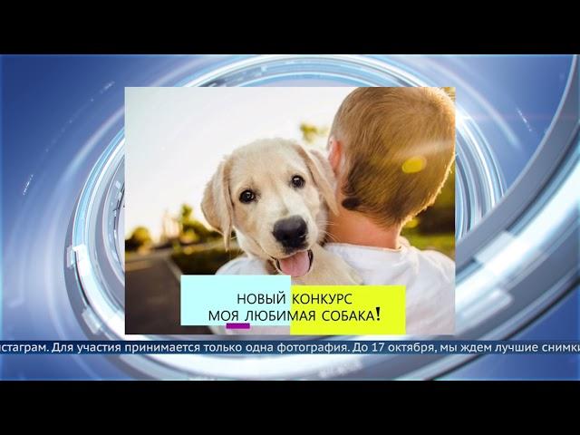 Конкурс «Моя любимая собака»
