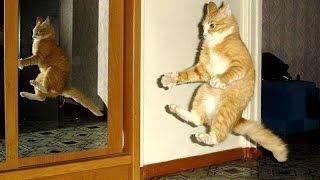 5 Самых смешных приколов с кошками