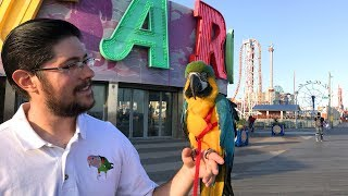 Rachel Blue and Gold Macaw Live at Coney Island