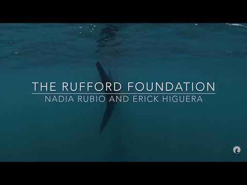 Whale Shark Holbox Island