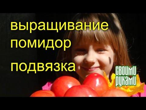 Выращивание помидор.  Подвязка.