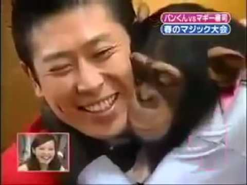 Chimp's Mind Is Blown By Magic Tricks