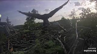 Congratulations Halley! She fledged at approx 6:57am Congratulations Rachel and Steve. 8-3-19