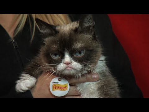 "Grumpy Cat, whose sourpuss demeanor became an internet sensation, has died at age 7.  The famous feline had millions of social media followers and her owners say she helped ""people smile all around the world."" (May 17)"