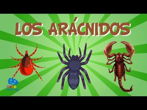 Az elmeszabályozó paraziták listája