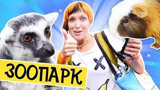 Капуки Кануки Маша и Марк. Контактный зоопарк в Питере. Видео для детей.
