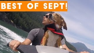 Funniest Pet Reactions & Bloopers of September 2017 | Funny Pet Videos