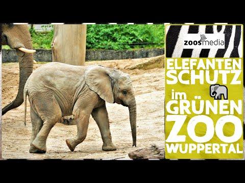 Film von Zoss.media: Elefantenschutz im Grünen Zoo