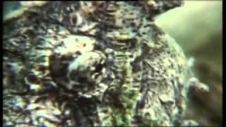 Reptiles Parte III